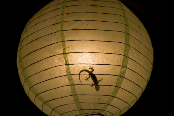 Plant a fake bug in their lamp