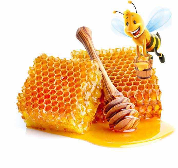 honey-with-bee